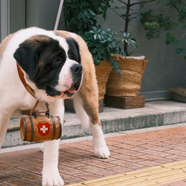 珈琲豆屋Beethoven 五代目看板犬・カイザー