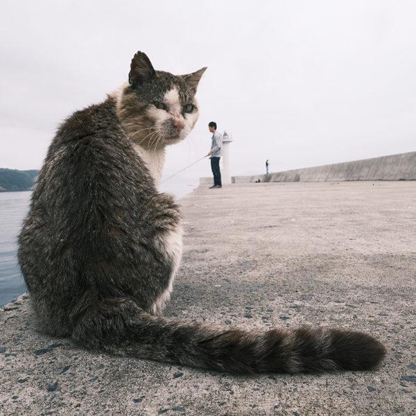 田代島のねこ Vol.3 マツタトモミ