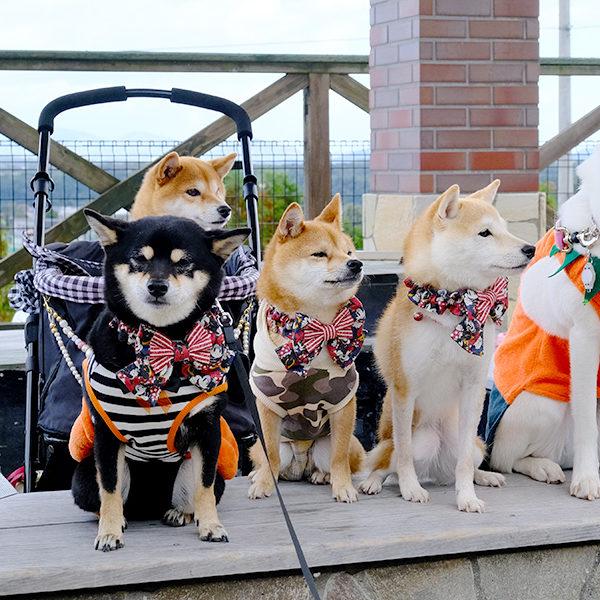 仙台わん子 × Jacks DogCafe & Trimming『ハロウィン祭』